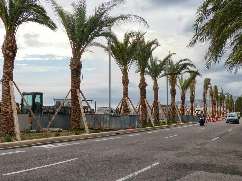 nice plante des palmiers pour payer leur d contamination le ficanas. Black Bedroom Furniture Sets. Home Design Ideas